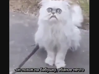 Субтитры к видео со злым котом [рифмы и панчи]