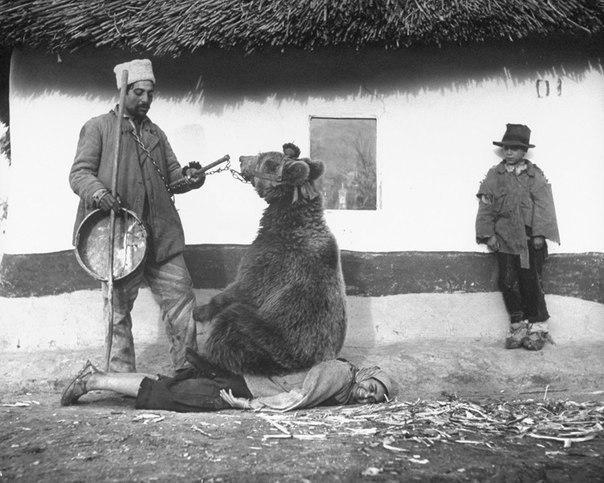 Лечение спины медведем. Румыния, 1946 г.