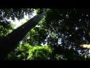 Древние деревья на о. Нейл