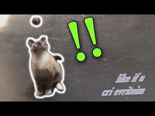 Cat gets Damaged