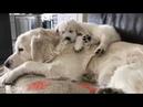 Забавные и Милые Собаки и Щенки Очень милое видео