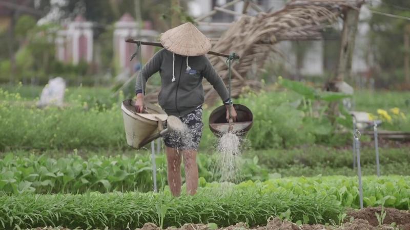 Hoi An, Vietnam DreamTrip Recap