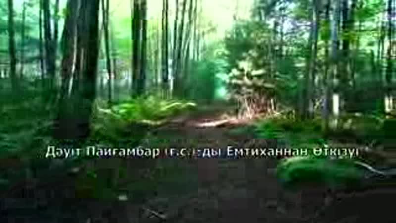 Алла Тагала нендей кул деп куранда мактаган еки пайгамбардын бири Дауит а.с.пайгамбар