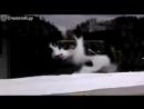 Кот терроризирует почтальона
