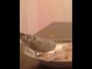рома кушает гречку