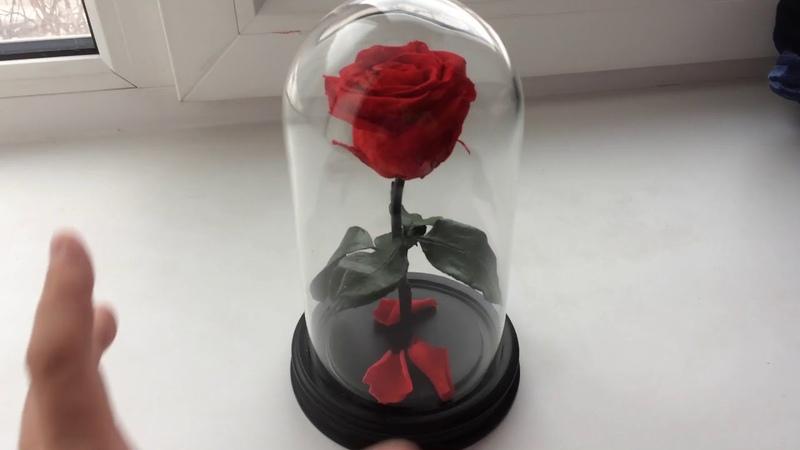 Роза в колбе. В чем секрет долговечной розы!
