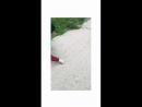 Video 27fdad639b39ff4f755caee1005445d9