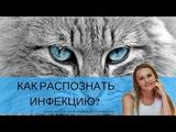 Как распознать инфекцию #YouTube_ветеринарные_курсы)