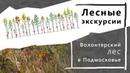 Как рубки помогают вырастить замечательный лес