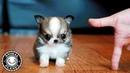 Baby Dogs 🔴 Cute and Funny Dog Videos Compilation (2018) Perritos Adorables Video Recopilacion