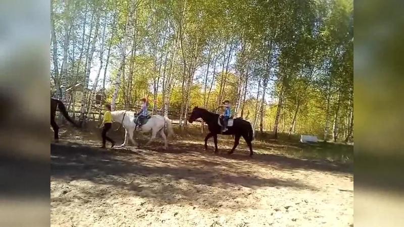 Экскурсия в конном клубе Центавр
