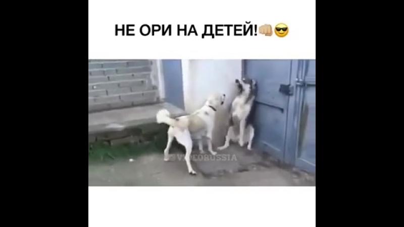 НЕ ОРИ НА ДЕТЕЙ!👊🏻😎