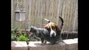 ПОПРОБУЙ НЕ ЗАСМЕЯТЬСЯ - ТЕСТ НА ПСИХИКУ, Смешные Приколы с Животными, смешные коты, Cute Cats 113