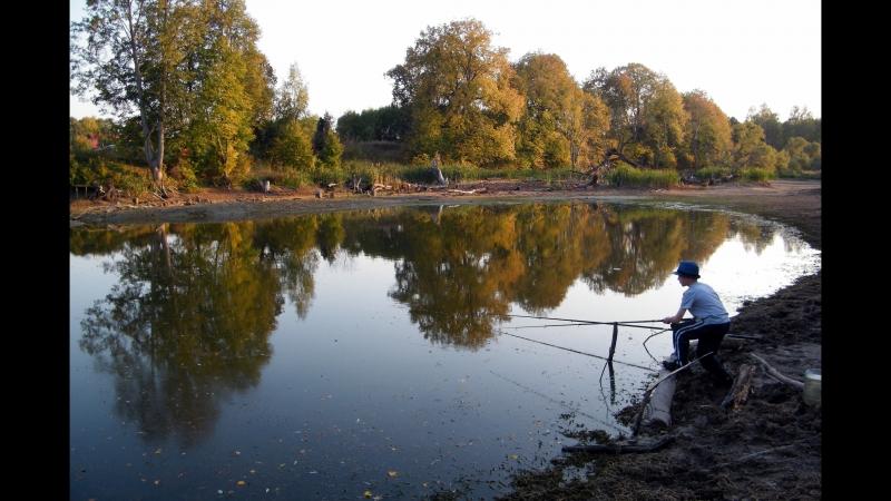 Свободу карасями X карась насвободу freedom свободукарасям караси свобода рыбалка писково карасик fish fishing пруд