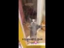 Танцующий котик идиш