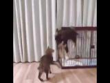 Вылез из вольера, чтобы втащить коту