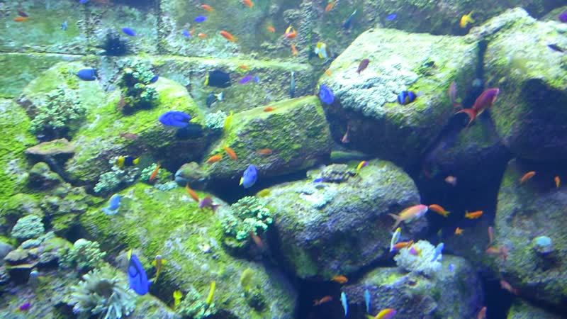 The Lost Chambers Aquarium at Atlantis, The Palm - Dubai (1).