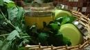 Glistnik jaskółcze ziele - maść, olej, napar. Zioło przeciw nowotworowe i inne zastosowania.