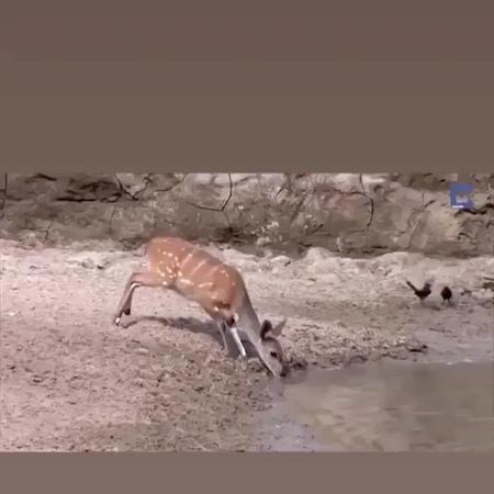"""@gyzykly_videolar on Instagram: """"Krokodildan Prank 🤣🤣🤣 *sesini açyp görüñ @gyzykly_videolar gyzykly tasin video soz degishme oglan gyz dur..."""