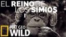 El reino de los simios, 1 de 2, duelo de reyes, documental en Español de National Geographic en HD.