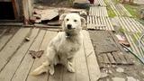 Собака которая улыбается