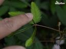 Идеальный противовоспалительный тандем хлорофилла и масла чайного дерева в креме от Kleona