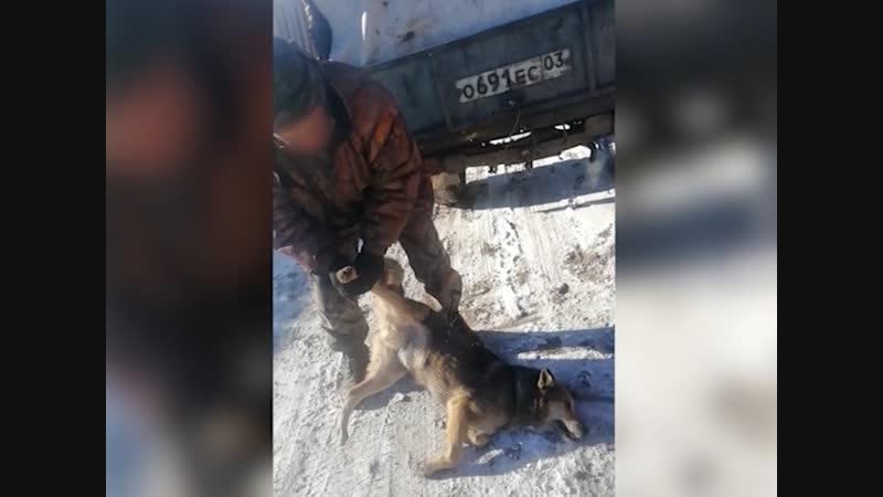 Улан удэнец снял на телефон шокирующий способ отлова собак Что возмутило автора видео