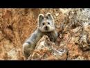 В Китае сняли на видео «волшебного кролика»
