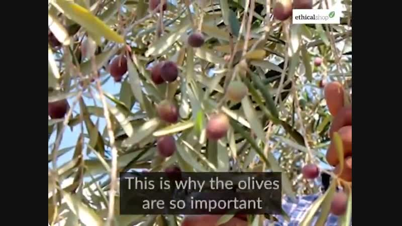 Why has this olive oil been called the most political food in the world_ WorldFoodDay WorldFoodDa
