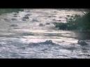 Поездка по реке, полной аллигаторов