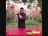 Мясо в горшочке от Burak Ozdemir