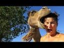 Смешные нападения животных на людей \ Funny animal attacks on humans