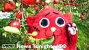 Nyango Star: The Heavy Metal Cat Mascot Saving A Japanese Farm (HBO)