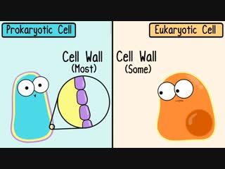 Prokaryotic vs. Eukaryotic Cells (Updated)
