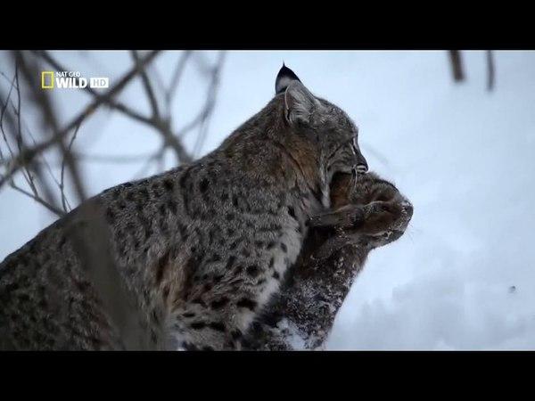 Дикая природа Миссисипи / 1 Серия - Во власти холода
