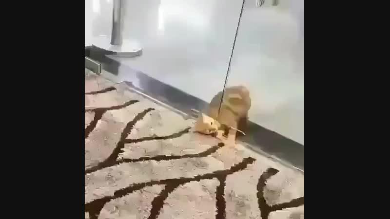 Кот решил пролезть через узенькую щель. Видео прикол