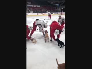 Practice was interrupted today in the most adorable way possible
