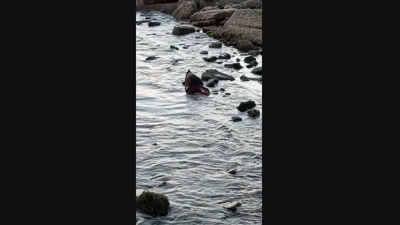 море утка и жажда