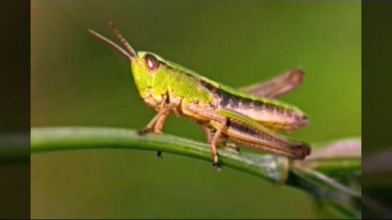 Sons dos insetos