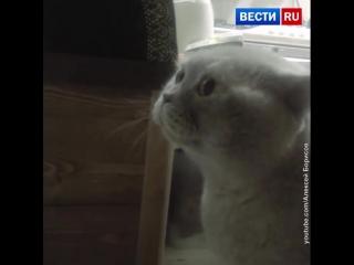 Кот человеческим языком просит открыть дверь