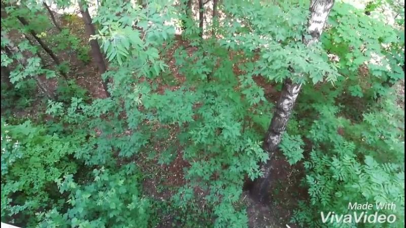 Дерево в спокойном состоянии но способное бить по балкону и почти до окна прогибаться в ненастье