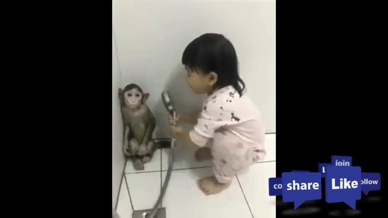 Kisah Monyet dan Balita