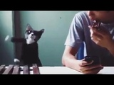 Cat Plays Cell Phone Ringtone