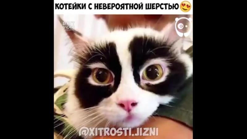 Коты расцветки