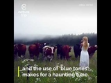 This woman summons cows with her voice!