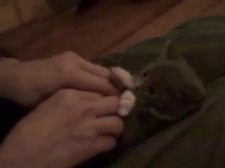 Няшный котенок мимими