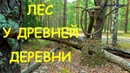 Лес около древней деревни