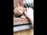 Резкая смена настроения котика