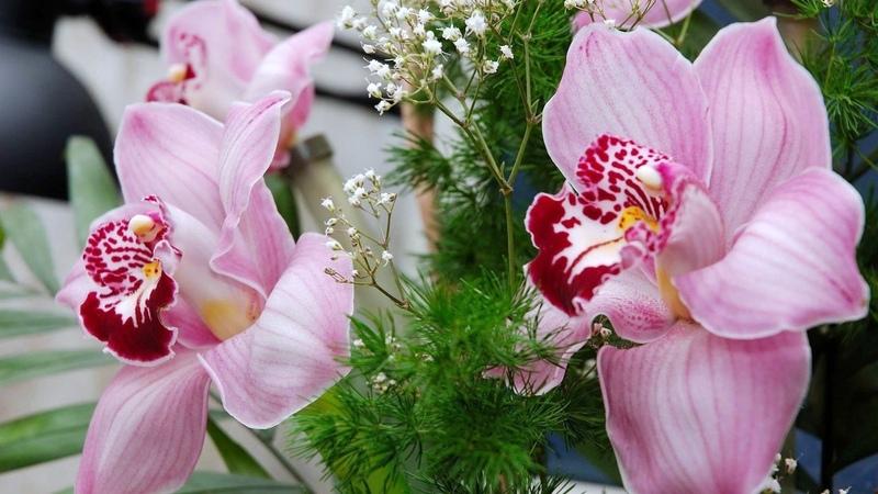 ** Orchidea ** - Ernesto Cortazar