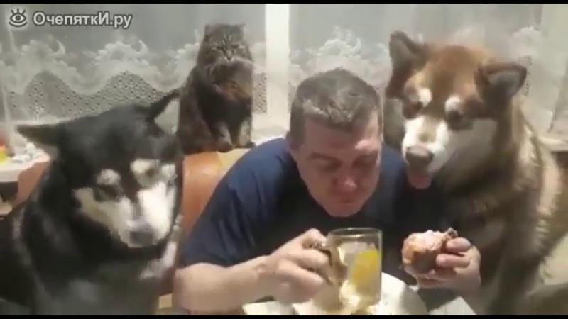 Дайте поесть спокойно